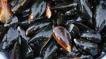 SFPA welcomes court ruling on shellfish offences