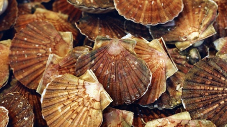 SFPA co-hosts international conference on molluscan shellfish safety
